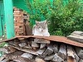Cute cat in the village