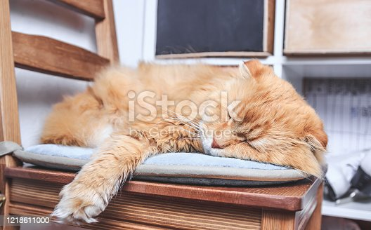 Cute cat is sitting at home on the chair. Funny red ginger cat in cozy home atmosphere. Selective focus