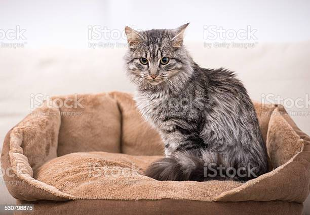 Cute cat is sitting in his cat bed picture id530798875?b=1&k=6&m=530798875&s=612x612&h=wen6k5ino4gtdvtjchrwubgd6eqimdcwawvnss79w1y=