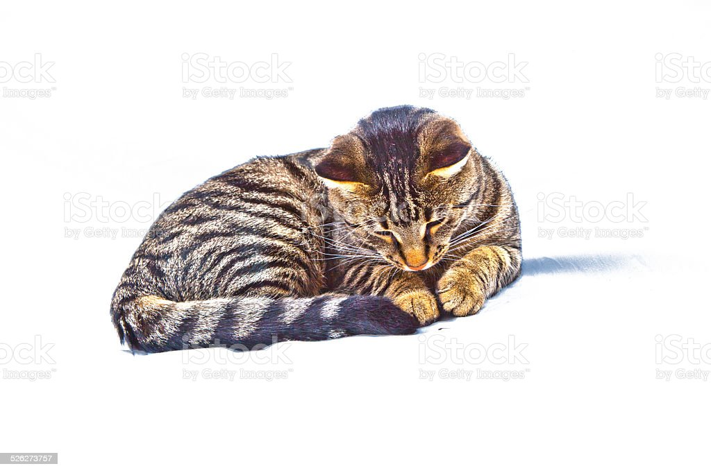 cute cat isolated on white stock photo