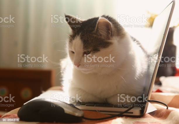 Cute cat lay resting on laptop keyboard on the table picture id951894316?b=1&k=6&m=951894316&s=612x612&h=7gffnmnfhhscuxuwtecwqy 3ucz32bn8odu6gkctgmk=