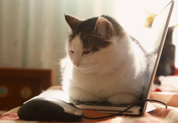 Cute cat lay resting on laptop keyboard on the table picture id951894316?b=1&k=6&m=951894316&s=612x612&w=0&h=mrmnykmfzrr8twa9ltflek39zswhhsrvocu6q9ksk a=