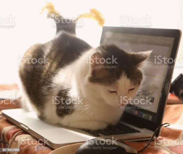 Cute cat lay resting on laptop keyboard on the table picture id957662058?b=1&k=6&m=957662058&s=612x612&h=km0uwyjhzkoe290dvanrs1xfuztlbirxutzpijaoruw=