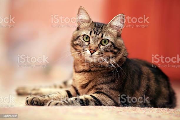 Cute cat laying down picture id94324862?b=1&k=6&m=94324862&s=612x612&h=weh l4c86jzrxqdkja0vwm 2sebxkb5uncqj6ljswsa=