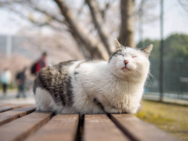 Cute cat laying on bench in park with comfortable expression enjoy picture id937760454?b=1&k=6&m=937760454&s=612x612&w=0&h=qvk3bl290a5rop9fv9tg0rlnovhpvu3f5mt5lalgpzo=