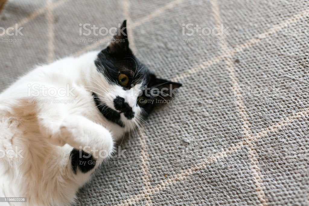 Cute Cat Lazy Lying On Stylish Rug In The Kitchen Top View Sweet Black And White Kitty With Mustache Resting With Interesting Look And Funny Emotions Space For Text Stock Photo