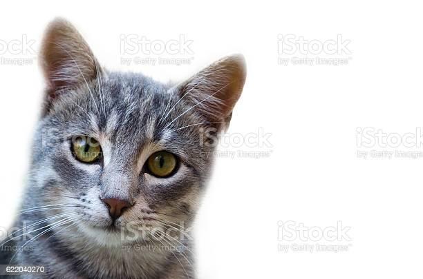 Cute cat looking at camera picture id622040270?b=1&k=6&m=622040270&s=612x612&h=i80qkoeiwcitkmjrf2gigpc8jj2m6yz3zv6f9x6xiiu=