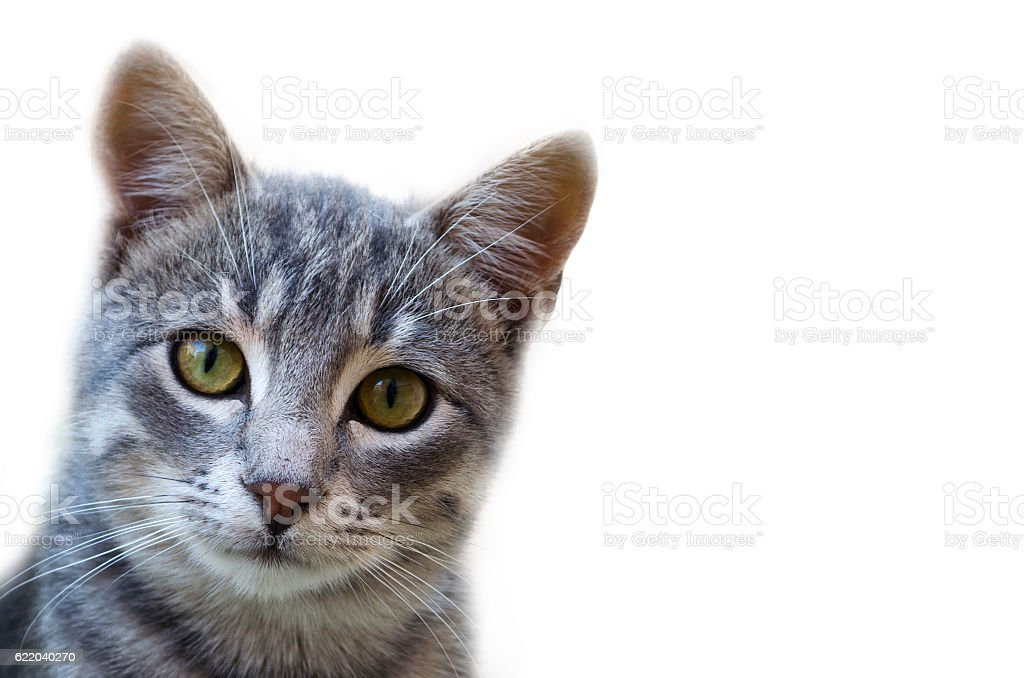 Cute Cat Looking At Camera stock photo