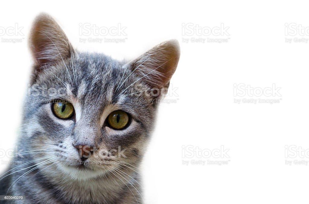 Cute Cat Looking At Camera - foto de stock