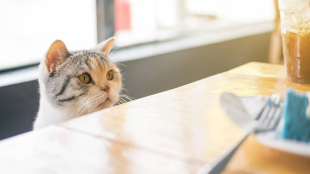 Cute cat looking at food on a wooden table. stock photo