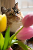cute cat looking through bouquet of tulips in the spring. easter colours.