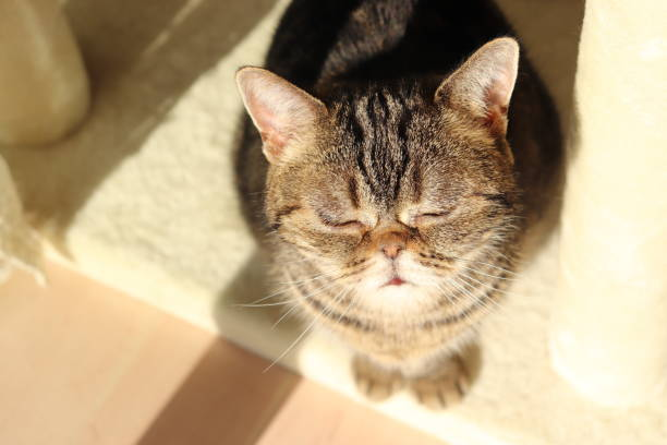 a cute cat looking up dazzlingly in the sunlight. - dazzlingly stock pictures, royalty-free photos & images