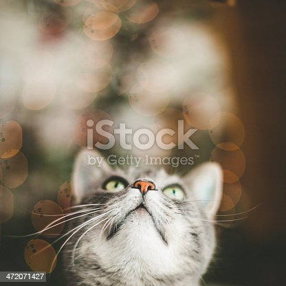 Cute cat looking up