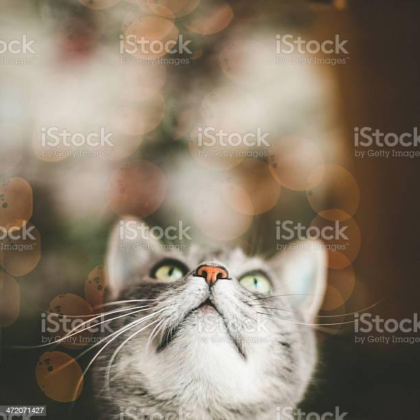 Cute cat looking up picture id472071427?b=1&k=6&m=472071427&s=612x612&h=1roegoim 6kmkr08dav51y1tkd1r  gttblqfzr2suc=