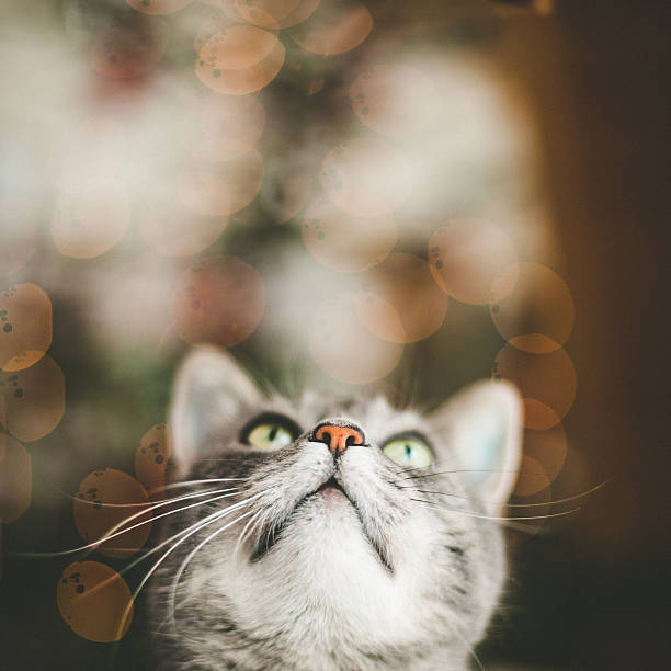 Linda gato mirando hacia arriba - foto de stock
