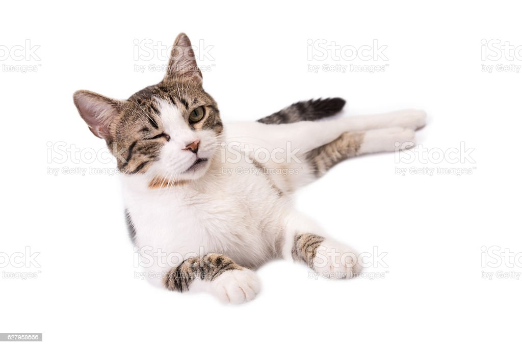 Cute Cat Lying On A White Background And Winking Stock Photo