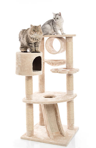 Cute cat lying on cat tower picture id599975962?b=1&k=6&m=599975962&s=612x612&w=0&h=e2llnuiqr19fppphvgrrfl is4x7sykmx clnp10nmk=