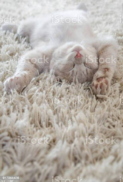 Cute cat lying on the back like on a carpet picture id917344426?b=1&k=6&m=917344426&s=612x612&h=6yxfywhohttcyohatwrydvkiugglocjuhtwvputy uk=