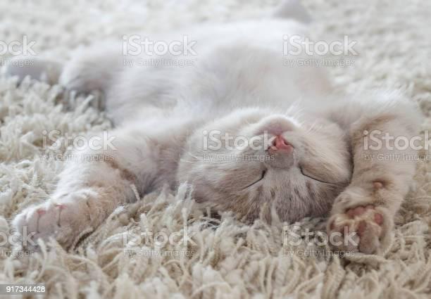 Cute cat lying on the back like on a carpet picture id917344428?b=1&k=6&m=917344428&s=612x612&h=90kkk6rbtxahpmrguyqkk3wiyyqflfqg60vbrpok3sc=