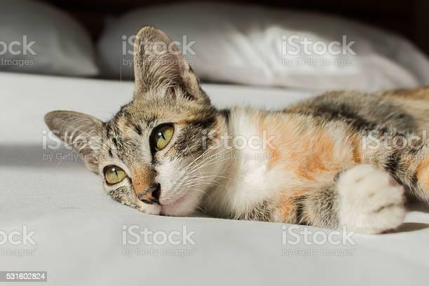 Cute cat lying on the bed picture id531602824?b=1&k=6&m=531602824&s=612x612&h=se pqbc4jlvxo4jgvk0tsgkc8kcju f2lh0 tetkzlm=