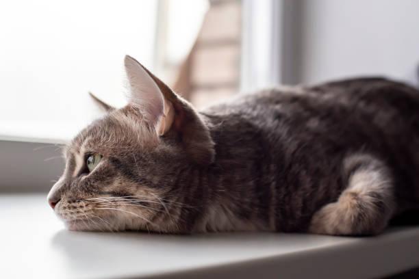 Bệnh trầm cảm ở chó mèo