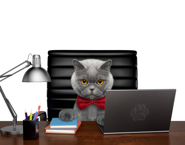 Cute cat manager is doing some work on the computer isolated on white picture id924363522?b=1&k=6&m=924363522&s=612x612&w=0&h=uiipraotyk8b2txlyk55hckvmf6rbeng3wikb2xefgq=