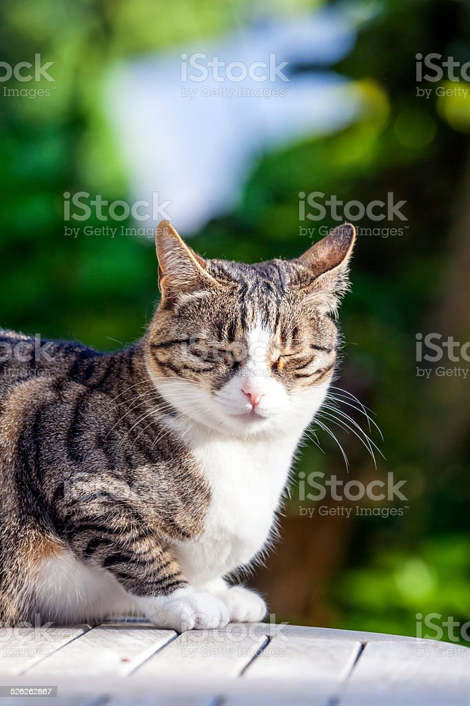 cute cat  on a wooden table in the garden stock photo
