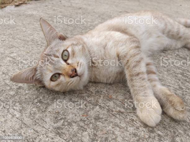 Cute cat on cement floor picture id1059928930?b=1&k=6&m=1059928930&s=612x612&h=tty1nyb2wzunw5qlkfqgp giq9m wrz6lze7idprly8=