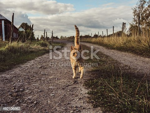 Cute cat on country road in autumn