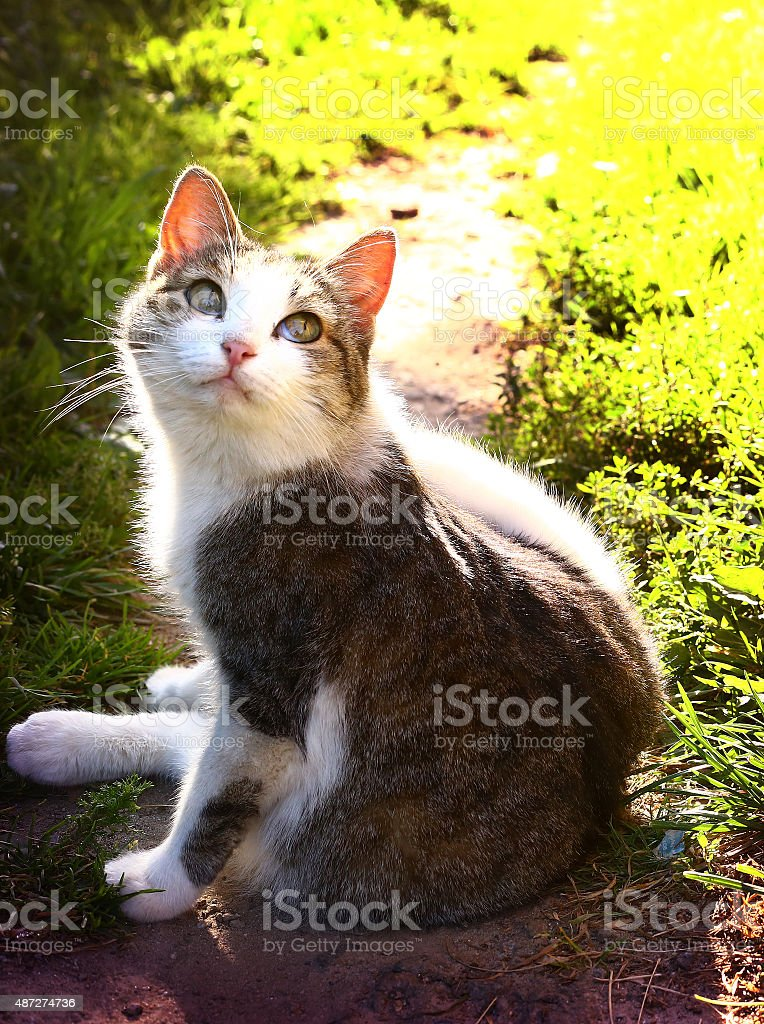 cute cat on the summer green sunny background stock photo