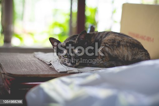 Picture of the Cute cat or kitten is sleeping in the lazy time
