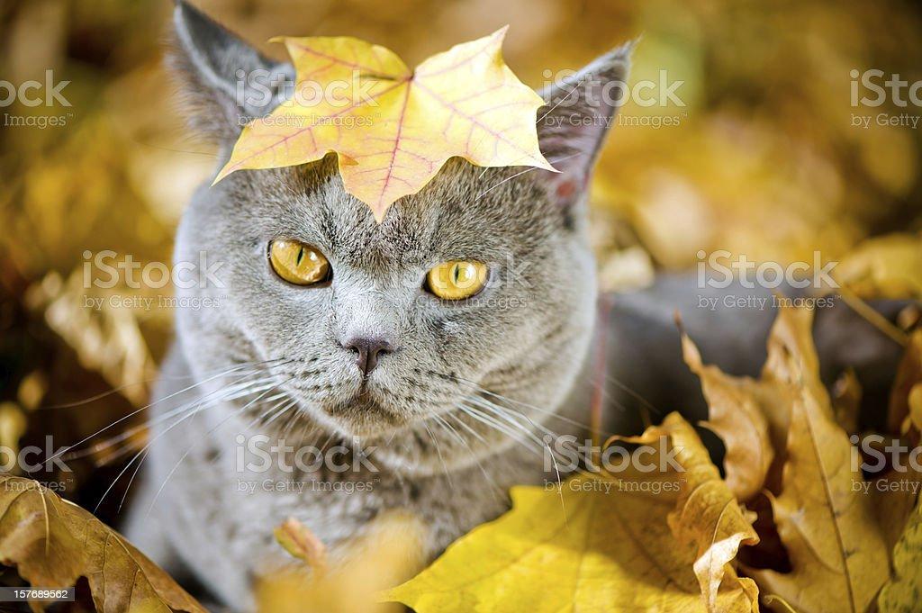 Cute cat oudoors stock photo