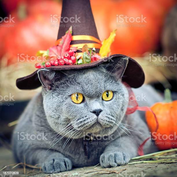 Cute cat oudoors picture id187070809?b=1&k=6&m=187070809&s=612x612&h=opsl3fx5nrznt8rn0e gqsdrzo1mxpzcvknfg90gpto=