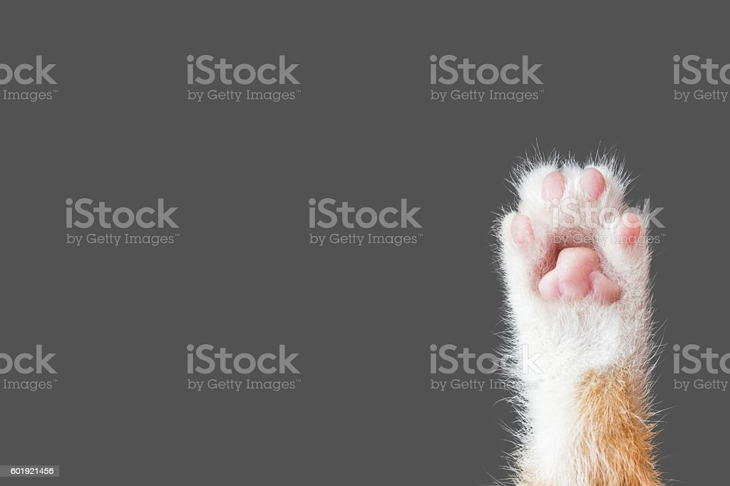 cute cat paw on dark gray background stock photo