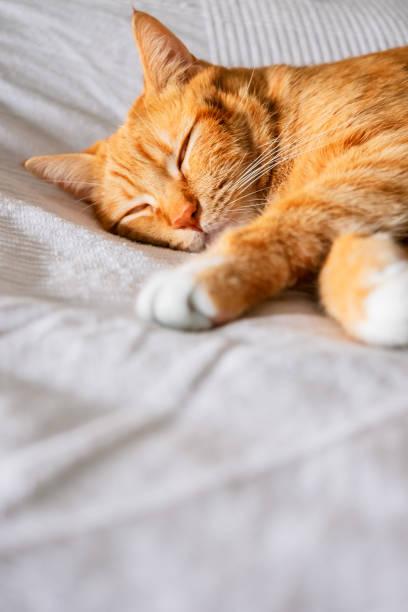 Cute cat picture id1215314079?b=1&k=6&m=1215314079&s=612x612&w=0&h=ceiupqu6j68cu9hibx02jva1krnej8pblheefpyno1g=