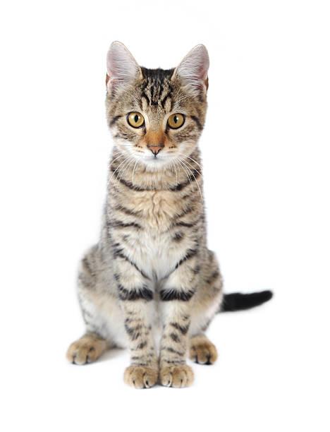 Cute cat picture id157685132?b=1&k=6&m=157685132&s=612x612&w=0&h=17fjq8l7acv8i4o84tngoonbepjxn8rdcvfr8plnrd8=