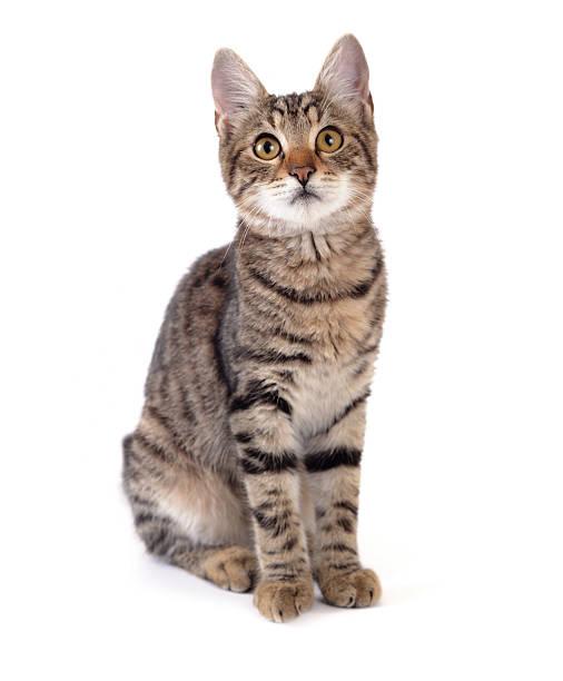 Cute cat picture id183272335?b=1&k=6&m=183272335&s=612x612&w=0&h=3a1skicalgy tmejgxwjfi0elnmjrdz35haahrkdztk=