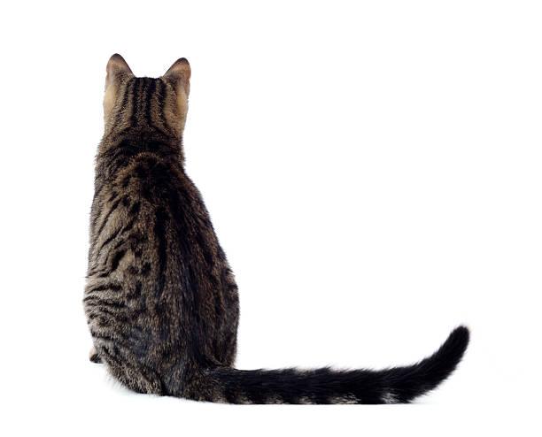 Cute cat picture id183281514?b=1&k=6&m=183281514&s=612x612&w=0&h=jt3 0lmmhxtoas9rdywndx5mbe t4mvbuof3ti0thko=