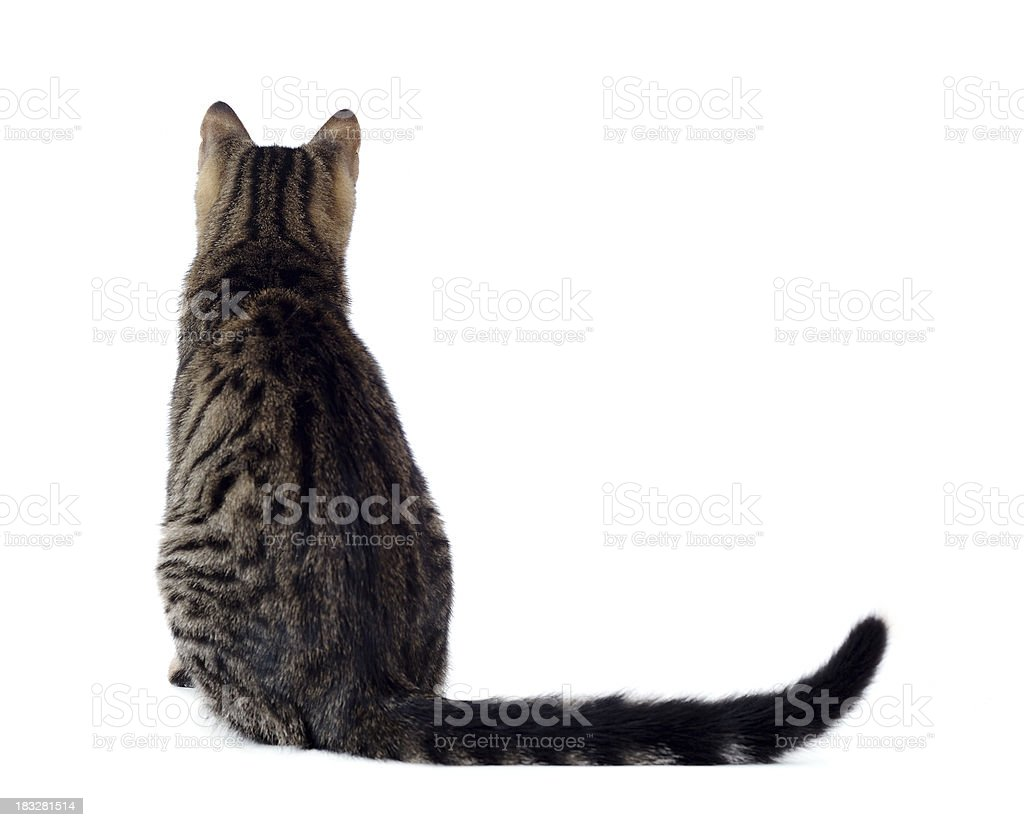 Linda Cat - foto de stock