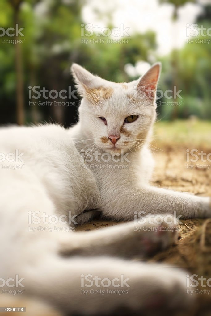 Cute cat royalty-free stock photo