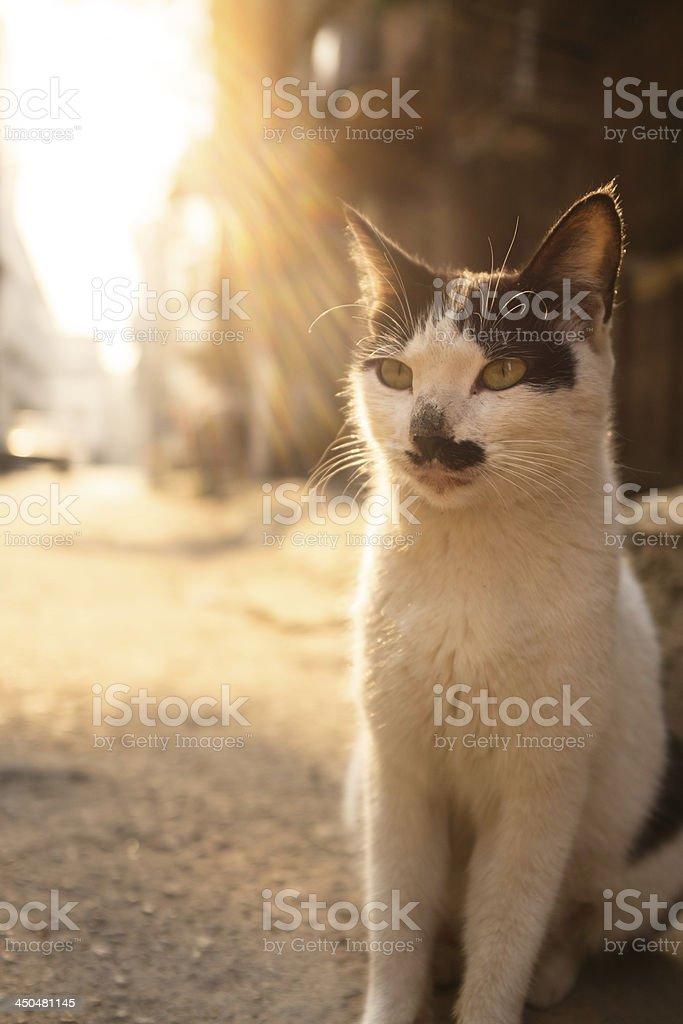 Cute cat royalty-free stock photo