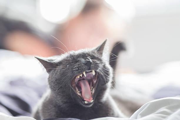 Niedliche Katze – Foto