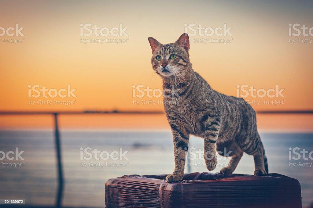 Linda cat - foto de stock