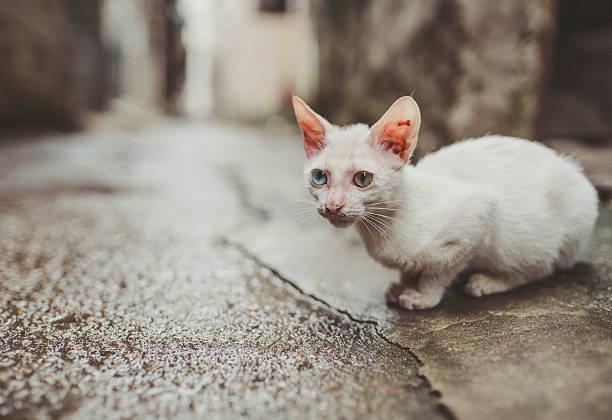 Cute cat picture id587787372?b=1&k=6&m=587787372&s=612x612&w=0&h=lte6zzijjdvwflau7kycmz7nns2nxfwduh0bta lesa=