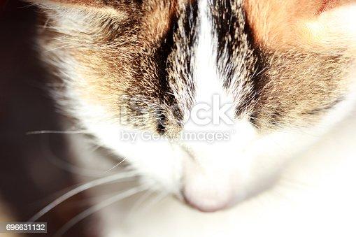 543560840 istock photo Cute Cat 696631132