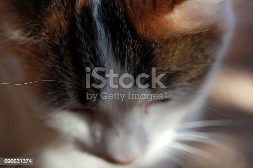543560840 istock photo Cute Cat 696631374