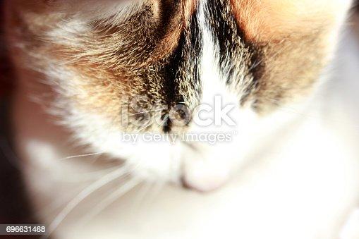 543560840 istock photo Cute Cat 696631468