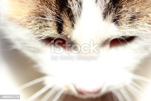 543560840 istock photo Cute Cat 696632276
