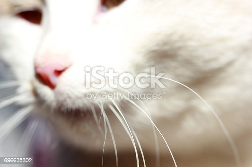543560840 istock photo Cute Cat 696635302