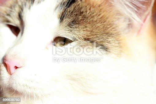 543560840 istock photo Cute Cat 696635760
